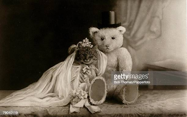 Colour illustration Teddy Bears Teddy bear and kitten pose as ' husband and wife' circa 1910