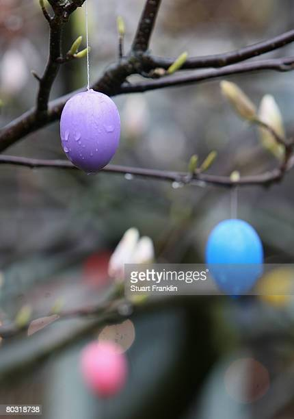 Coloured decorative Easter eggs hang on a rain soaked tree in Eppendorf as weather forcasters predict wet weather for the easter holidays on March 20...