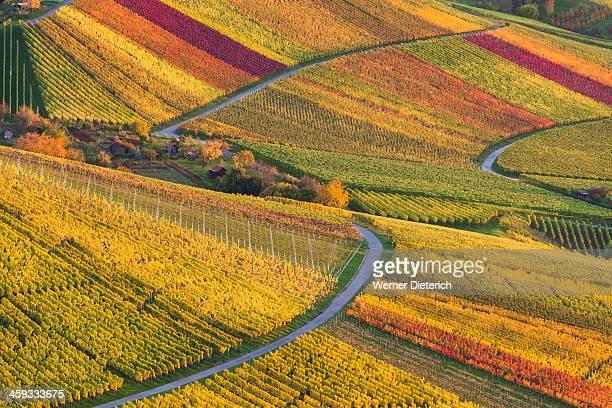Coloured vineyards in Stuttgart, Germany