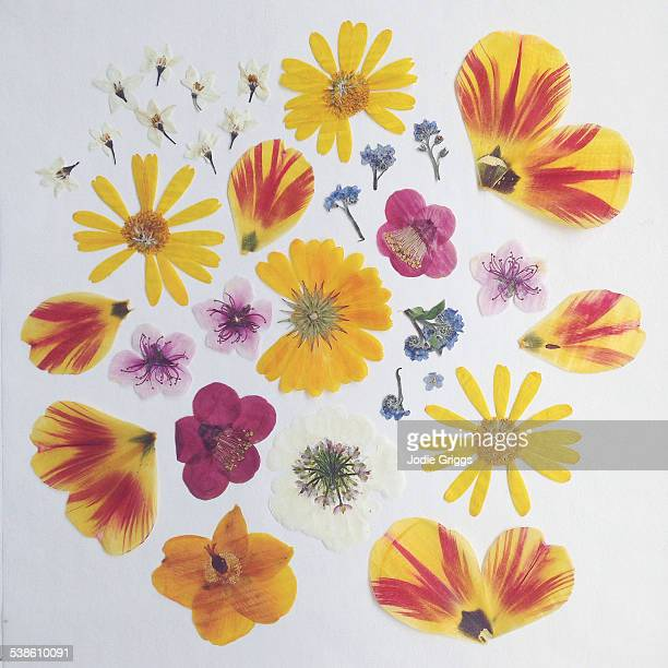 A colourful arrangement of pressed flowers