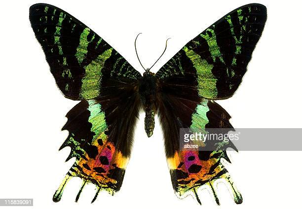 Colourful Butterfly Isolated