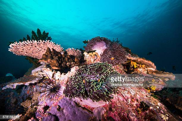 A colourful coral reef scene