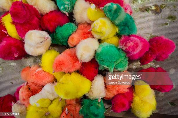 Colourful dyed chickens for sale in an open air market to celebrate Nowruz Iranian New Year.