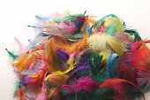 Colourful feathers on a white background