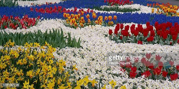 Colourful Flower Garden, Keukenhof, Holland