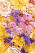 Colourful flowers, full frame