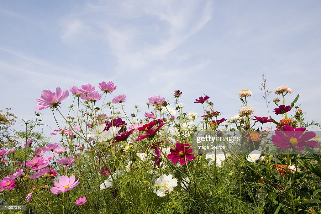 Colourful flowers : Stock Photo