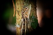 Colourful garden lizard on plant branch animal photography