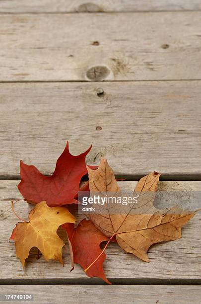 colourful maple leaves on a wooden floor