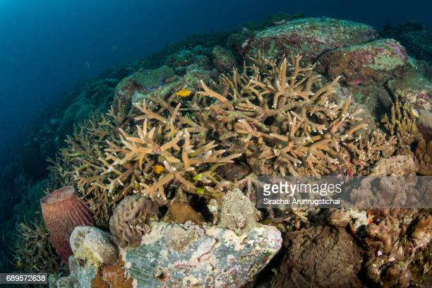 Colourful scene of healthy coral reef