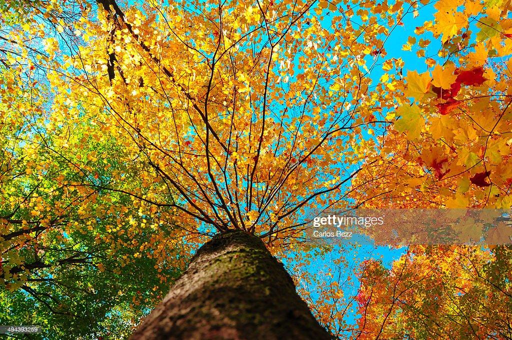 Colourful tree : Stock Photo