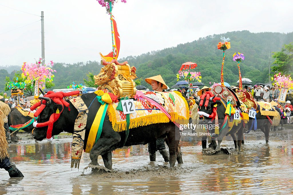 Colourfully decorated cattle plough paddies during the Japanese rice planting ritual 'Mibu no Hana Taue', an UNESCO Intangible Heritage carried out at the beginning of rice season in hope of good harvest on June 2, 2013 in Kitahiroshima, Hiroshima, Japan.