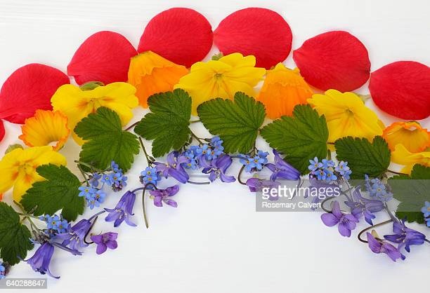 Colours of the rainbow illustrated with flowers.