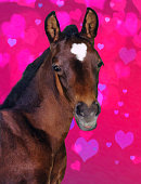 My Andalusian mare had this little colt ten years ago on our small farm in Acton, Massachusetts. but I recently added a heart overlay with Photoshop to give it an added and sweet dimension.  It would