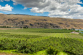 The Columbia river provides irrigation for hundreds of apple orchards all across the Okanogan area of eastern Washington state.