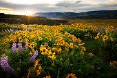Springtime in the Columbia River Gorge, Oregon.