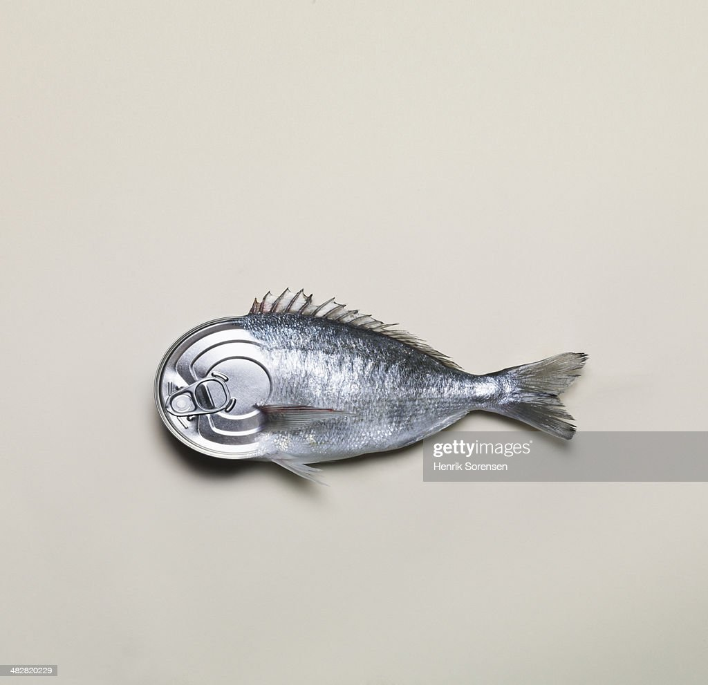 Combination of a can and a fish