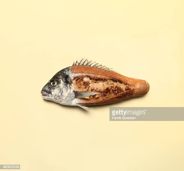 Combination of a fish and white bread
