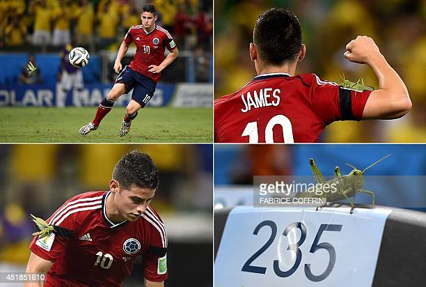 A combination of pictures shows a giant insect flying towards Colombia's midfielder James Rodriguez and landing on him after he scored from the...