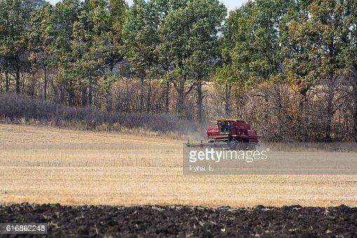 Combine harvest on the field. Grain harvesting combine. : Stock Photo