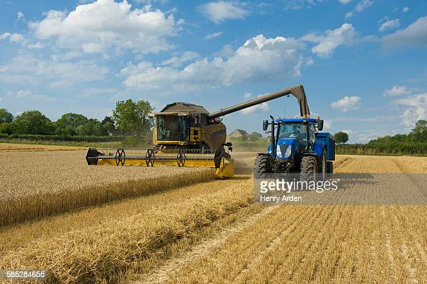 Combine harvester and tractor harvesting wheat in wheatfield