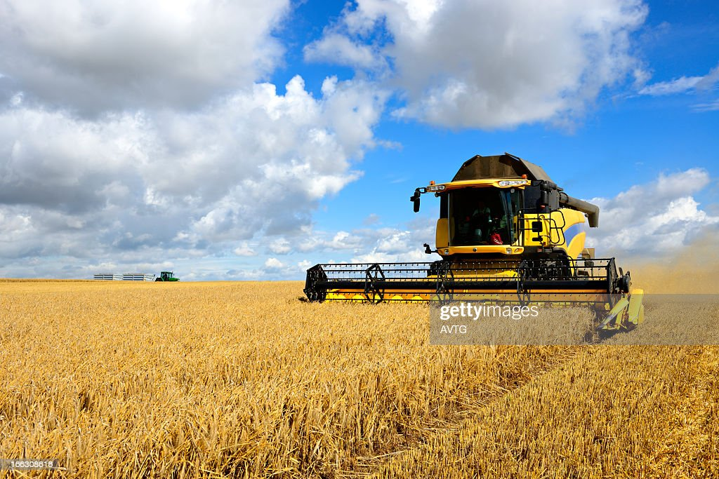 Combine Harvester and Tractor in Barley Field during Harvest