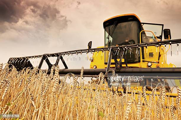 Combine Harvester and wheat