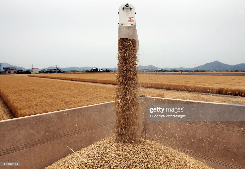A combine harvester dumps harvested wheat into a truck in a field at the start of wheat harvesting season on June 6, 2013 in Okayama, Japan. Japan is the world's sixth-biggest wheat buyer and imports around 800,000 tonnes each year, 60 percent of which is from the US.
