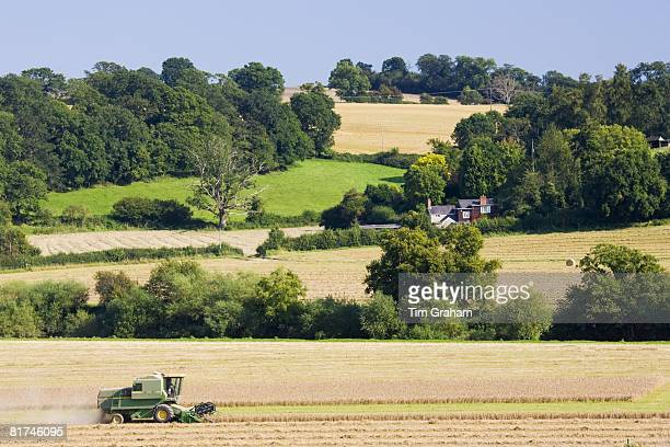 Combine harvester in a wheat field Herefordshire England United Kingdom
