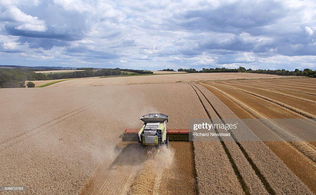 Combine Harvesting Crop in Neat Lines