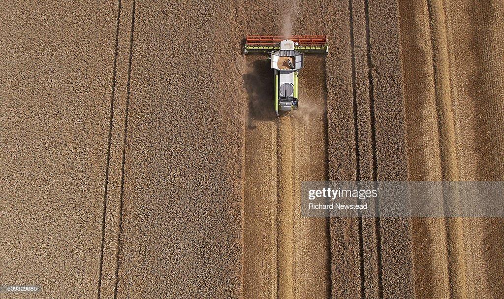 Combine Harvesting Crop