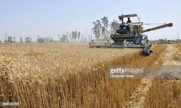 Combine harvesting the wheat crop on the occasion of Baisakhi festival on April 13 2017 in Ludhiana India Baisakhi is a historical and religious...