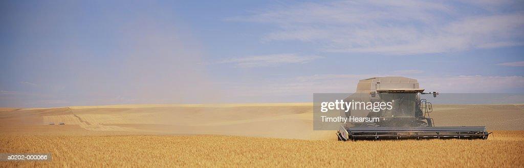 Combine in Wheat Field : Stock Photo