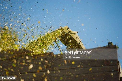 Combine shooting grain into a bin : Stock-Foto