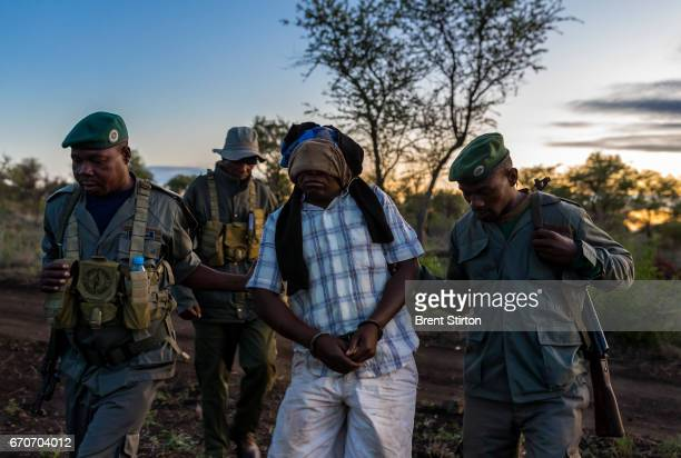 A combined force of Sabie Game Park Rangers Garda Frontier soldiers and Fauna Bravia soldiers arrest and detain Moses Chauque a level 2 rhino poacher...