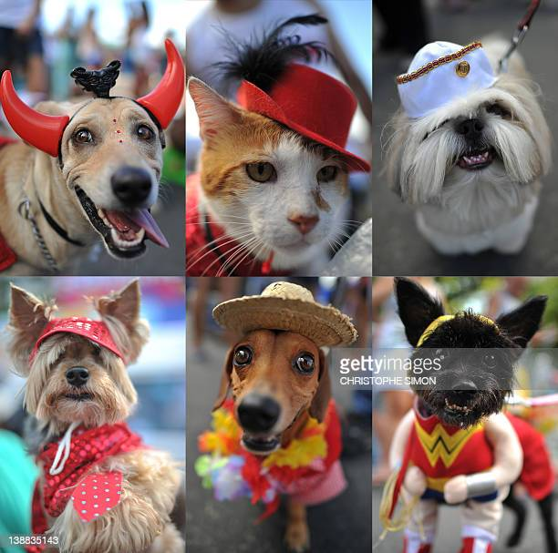 Combo picture of fancy dressed dogs and a cat taking part in the animal carnival parade at Copacabana beach in Rio de Janeiro Brazil on February 12...
