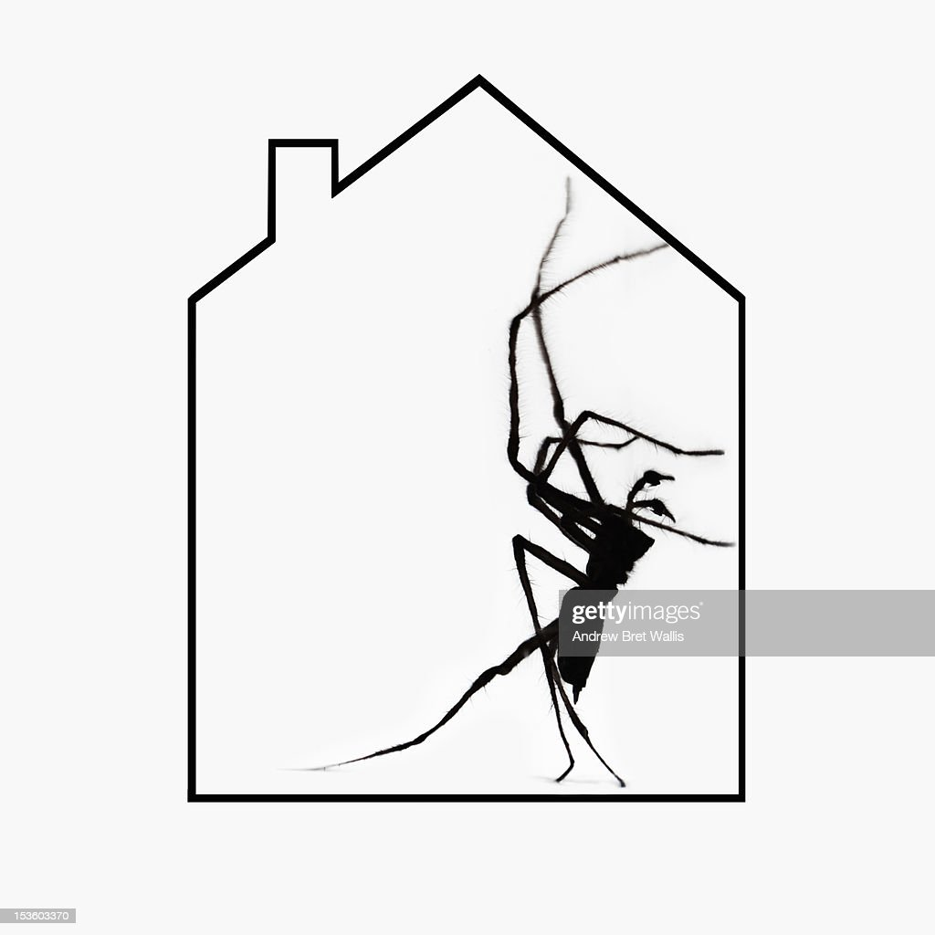 House outline picture - Common House Spider Inside A House Outline Stock Photo