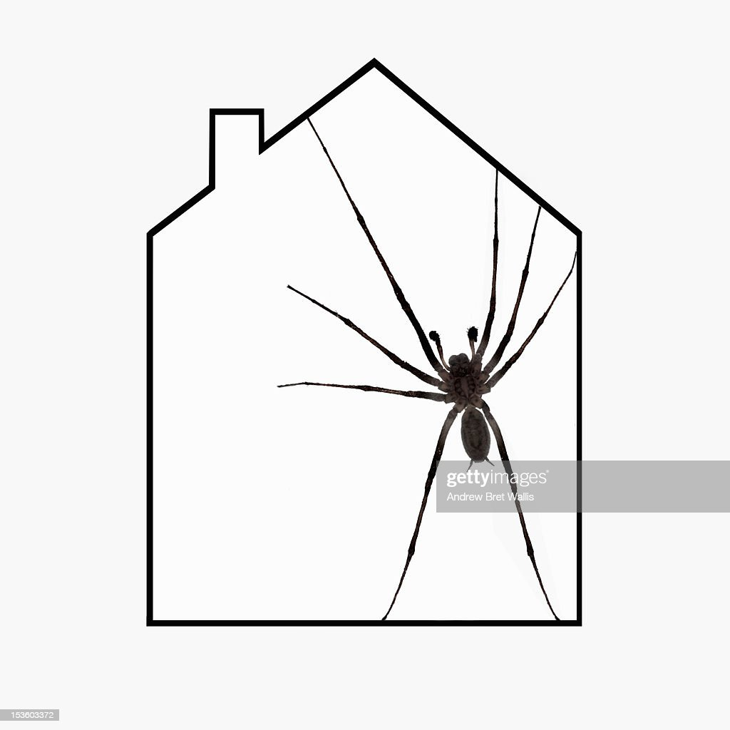 Common house spider within a house outline : Stock Photo