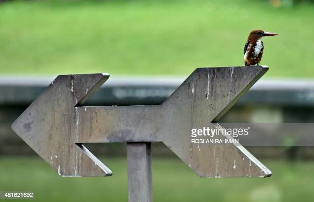 A common kingfisher rests on a sign at the botanical gardens in Singapore on July 23 2015 AFP PHOTO / ROSLAN RAHMAN