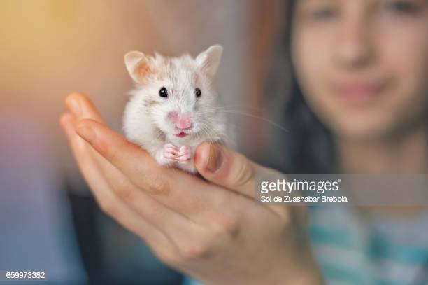 Common white hamster held in the hand of a happy little girl