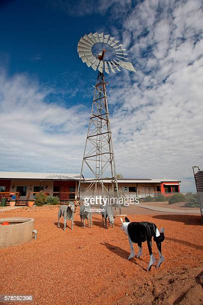Community and information center with sculptures of three sheep and a sheepdog under a windmill Stonehenge central west Queensland Australia