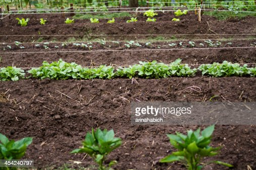 Community garden : Stock Photo