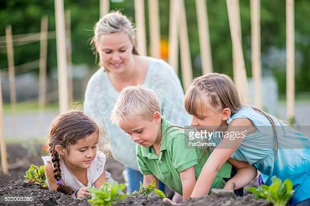 Comunidade de Jardinagem