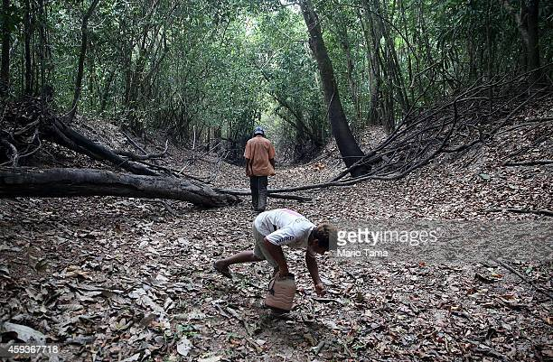 Community leader Luiz Lopes and son Railton Lopes walk while giving a tour of threatened forests near homes in the Imbiral quilombo which community...