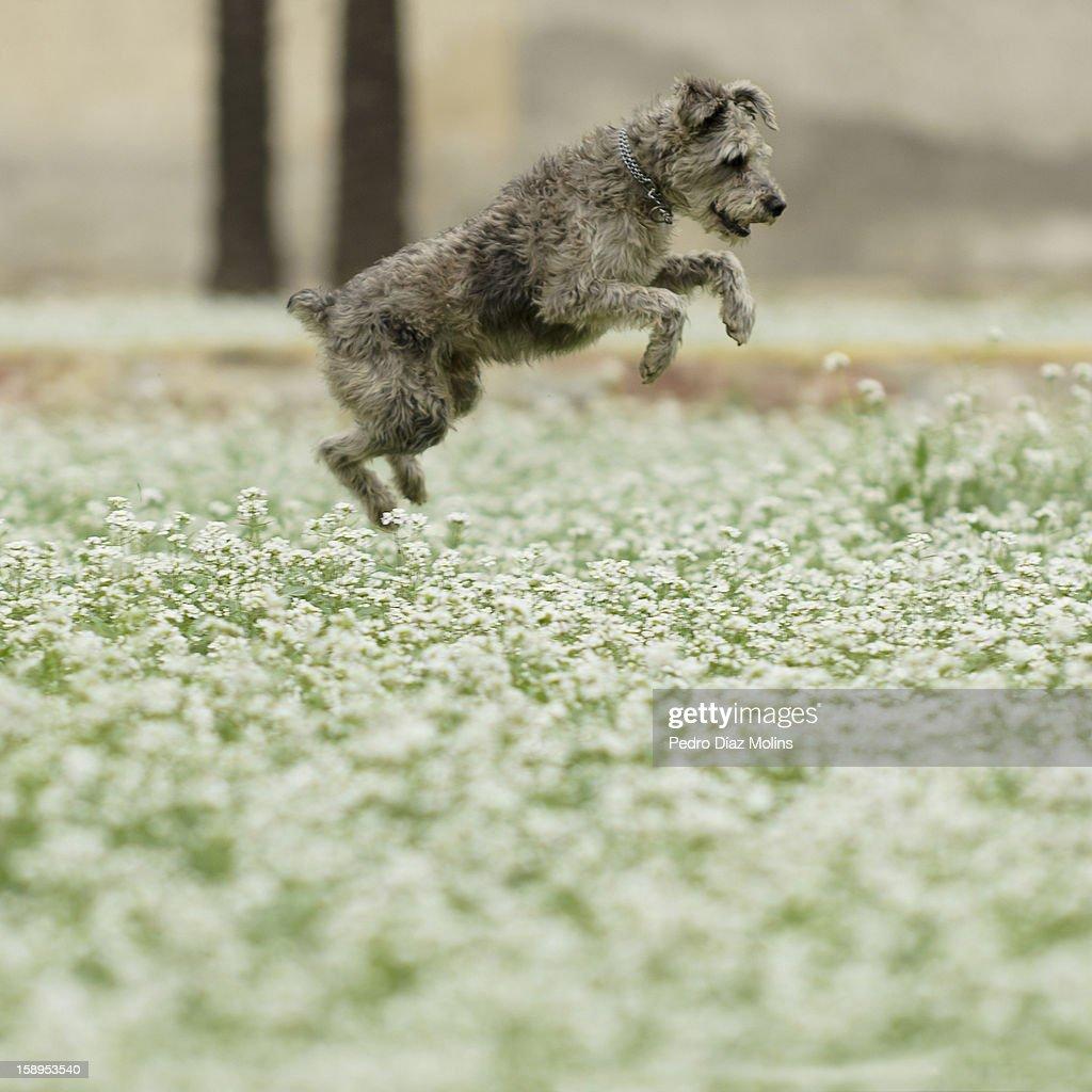 Como una cabra : Stock Photo