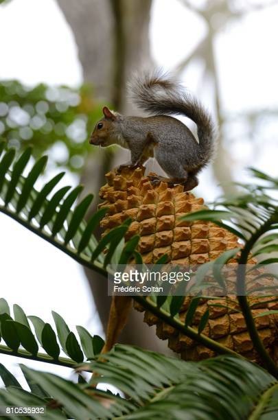 Company's garden at Cape Town squirrel Western Cap on April 16 2017 in Cape Town South Africa