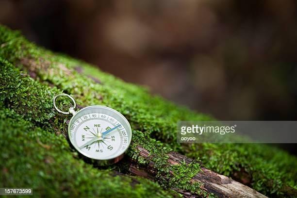 Compass in einem Wald