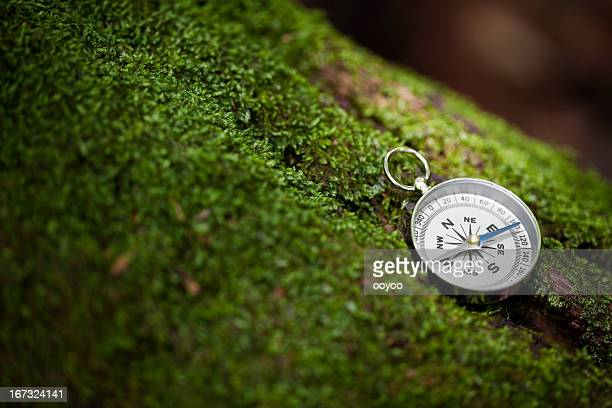 Compass on Mossy Tree with Sunlight
