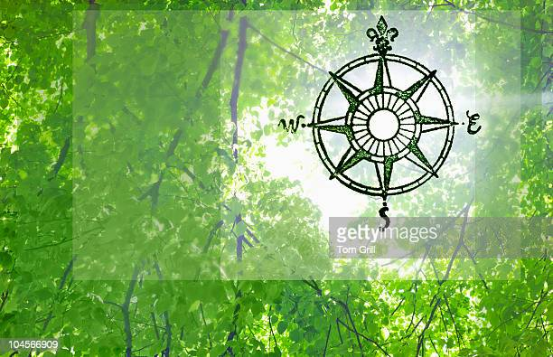Compass rose and trees