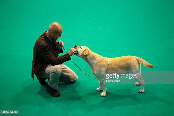 A competitor gives a treat to his Labrador as they compete on the first day of Crufts dog show at the National Exhibition Centre on March 5 2015 in...
